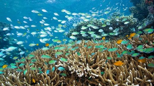 I Indonesien hittar du några av världens bästa dykvatten