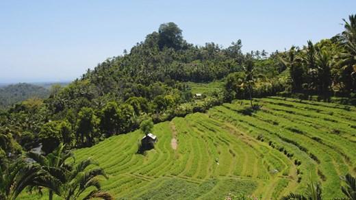 Se till att ta dig utanför byarna och upplev Balis vackra risfält