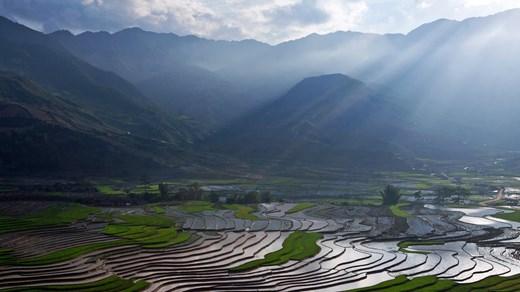 Ris odlas på stora risfält i hela Burma