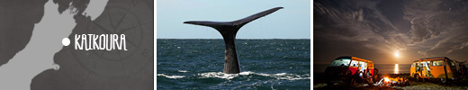 Explore Kaikoura - New Zealand's whale-watching capital